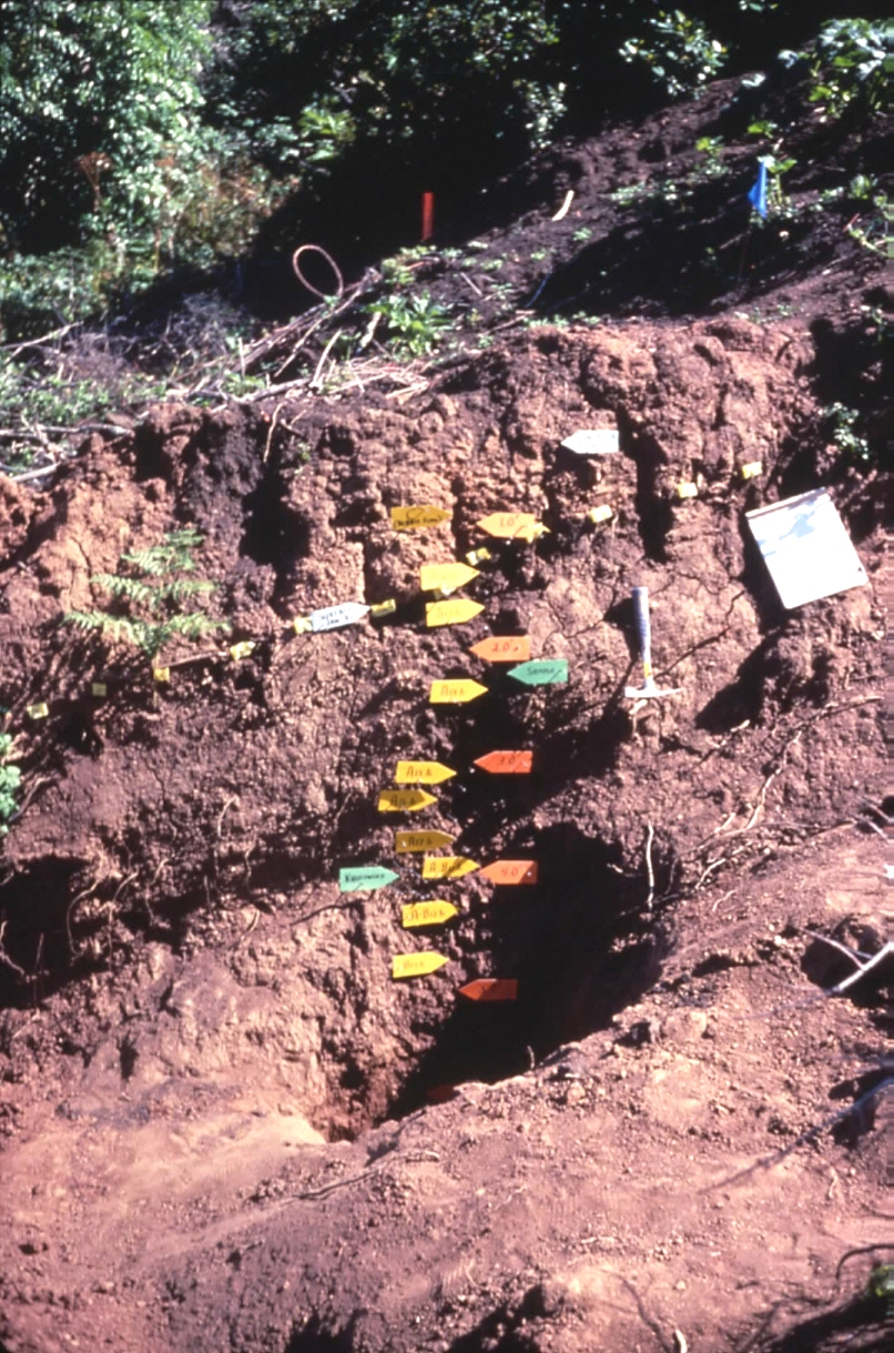 Site characterization for Soil genesis